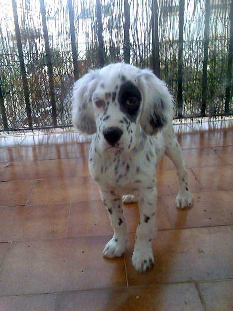 http://elmundodelcachorro.files.wordpress.com/2011/02/elmundodelcachorro-setteringles01.jpg